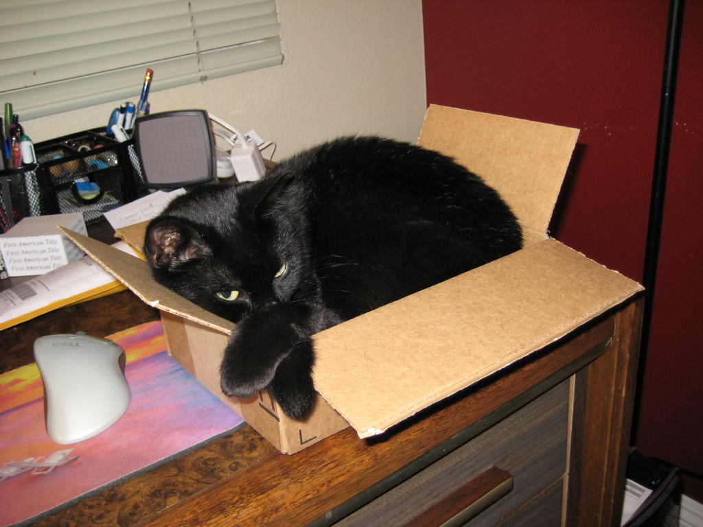 Our cat Jade in a box - the hardest thing to part with