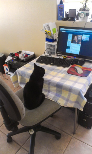 cat-working-on-computer