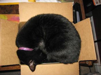 Jade cat curled up in shipping box