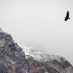 Torres del Paine Bird Flying over Mountains