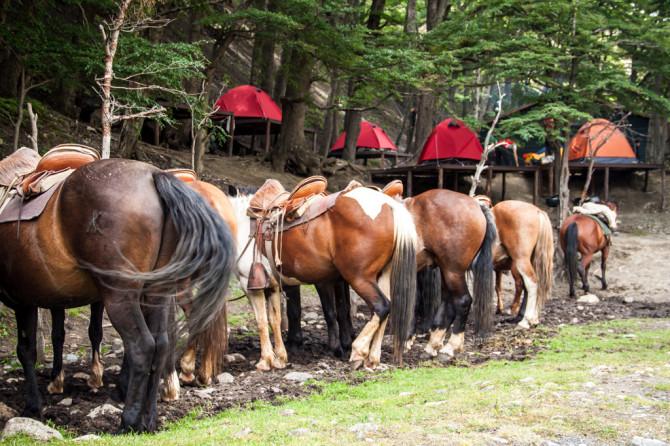 Torres del Paine Horses