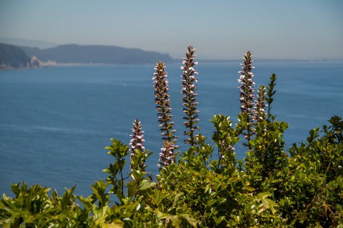 Ocean view in Lota Chile