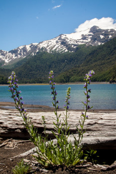 Conguillio National Park with Flowers Lake and Mountains