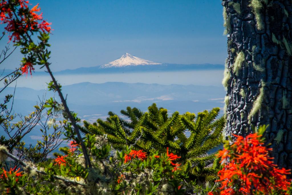 Volcano View at Parque Nahuelbuta