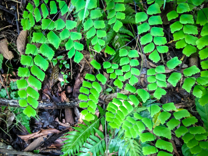 Cool Looking Fern on Trail to Waterfall