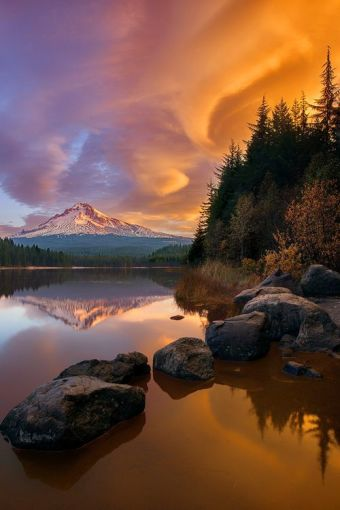 Mount Hood at Sunset, Across a Lake with Pine Trees