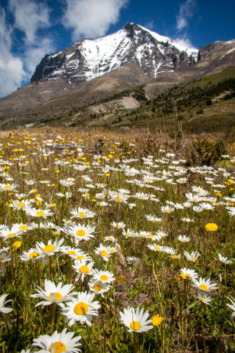 Flowers in a Meadow at Torres del Paine