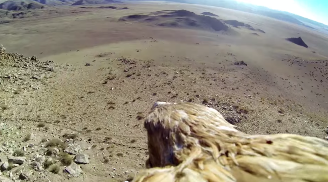 Go-Pro on an Eagle