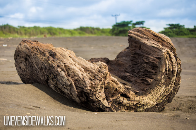 Driftwood Log on Beach in Costa Rica