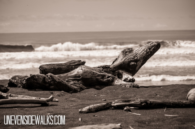 Driftwood Logs with Waves in the Background
