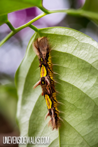 Catarpillar on Leaf