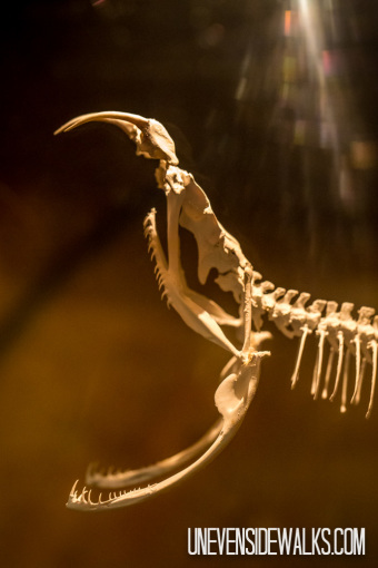 Snake Skeleton with Jaws Wide Open