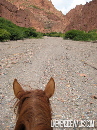 Horse heading down Valley
