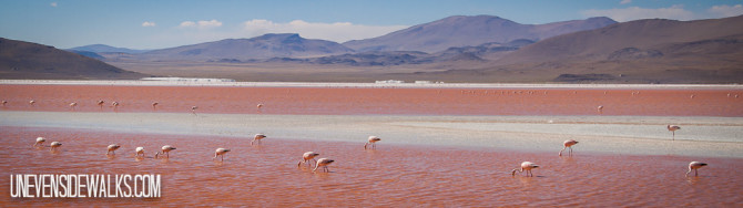 Big group of flamingos eating from the red lake