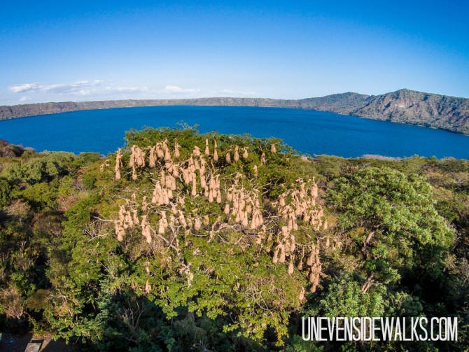 Oropendola Nest Overlooking Laguna de Apoyo