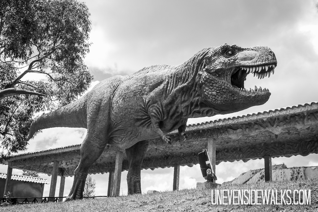 Pics Photos - Black And White Running Rex