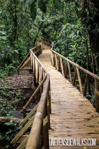 Path Through the Trees in Costa Rica