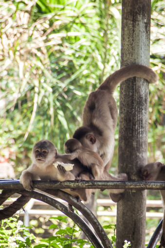 Monkeys Playing Around