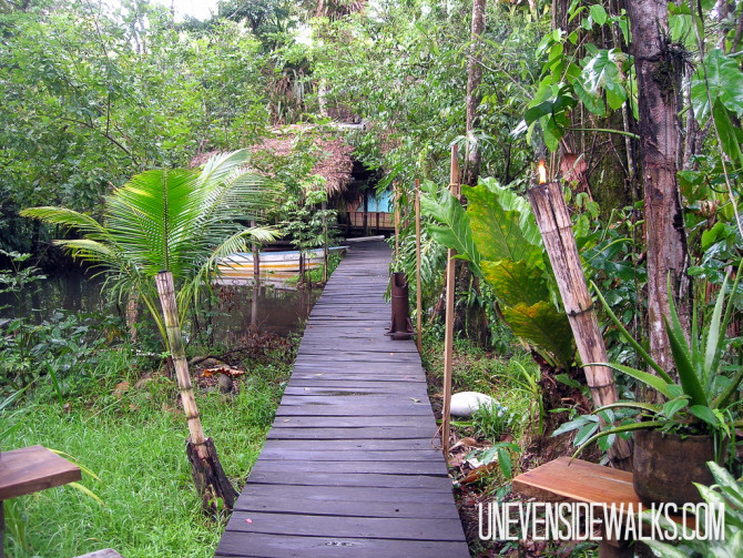 Wooden Walkway Through the Jungle