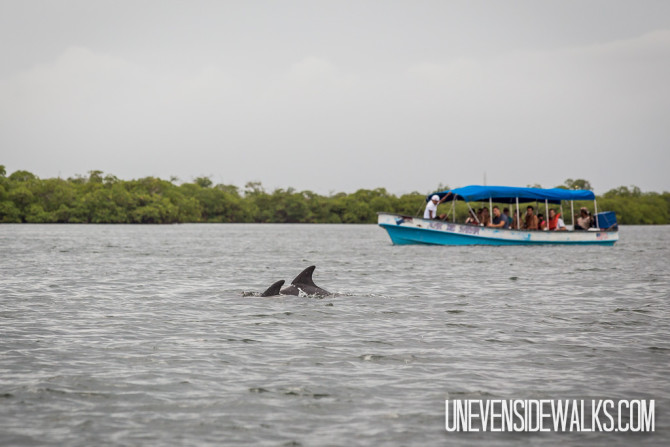 Dolphins in the bay in front of a Boat