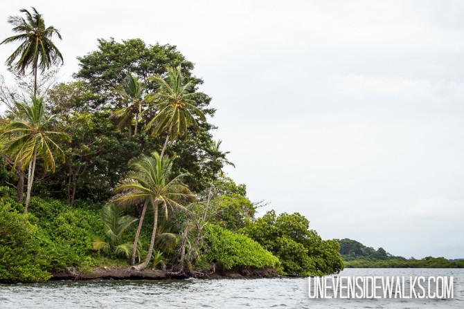 Pretty Island View