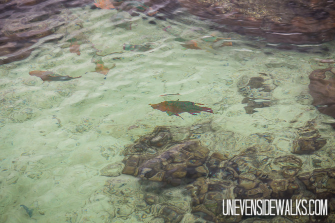 Super Clear Water for Snorkeling