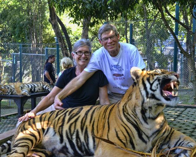 Big Teeth Posing at Tiger Kingdom
