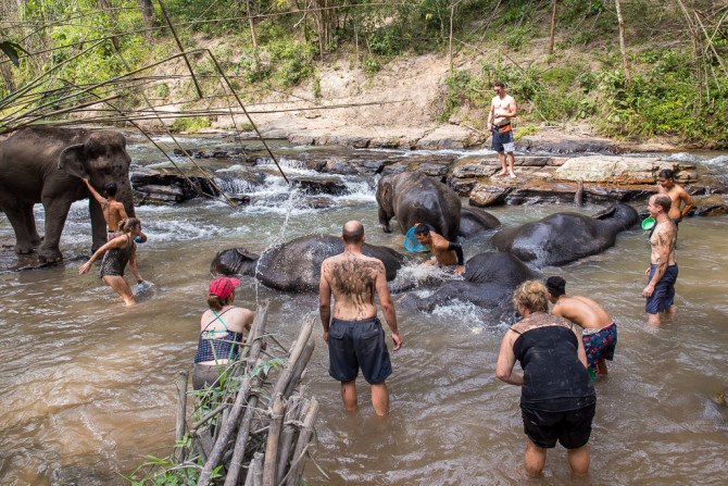 Bathing in the River with Elephant Sanctuary in Thailand