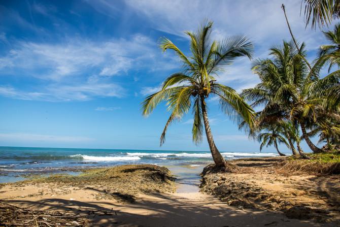 Beach Palm Tree in Latin America
