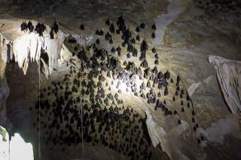 Bats inside the Cave