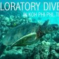 Exploratory Dive FI