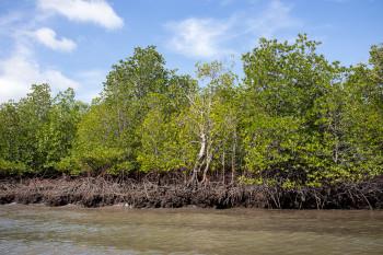 Mangrove Shoreline Langkawi Geopark
