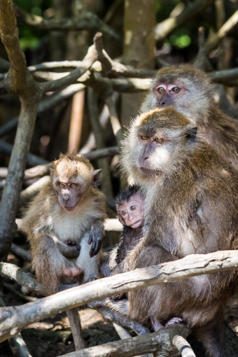 Monkey Famly in Tree